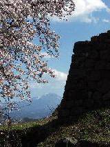 米子城跡桜